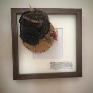 bug framed 2