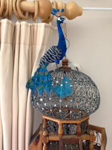 peacock in place