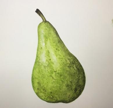 pear-4117